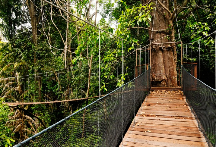 Mr & Mrs Smith - Canopy Walk