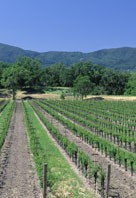 napa_web_02