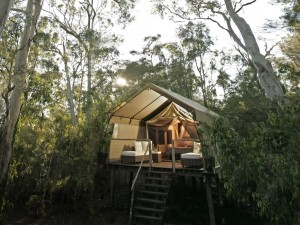 Photo of Paperbark Camp